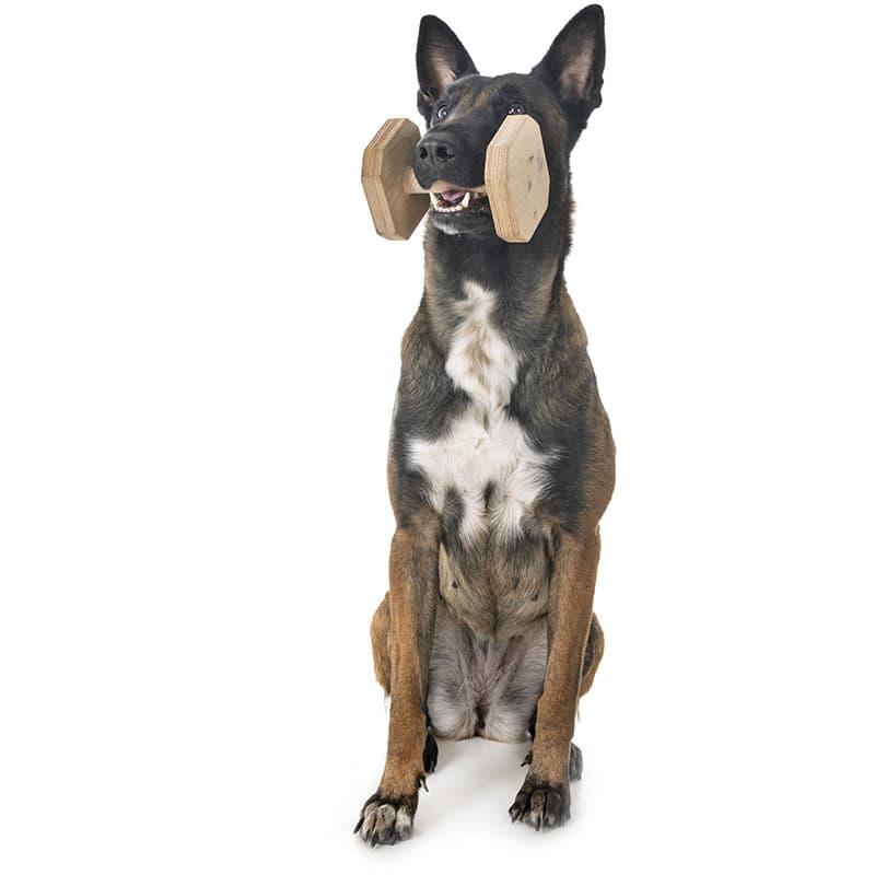 obedience addestramento cani livorno maddog